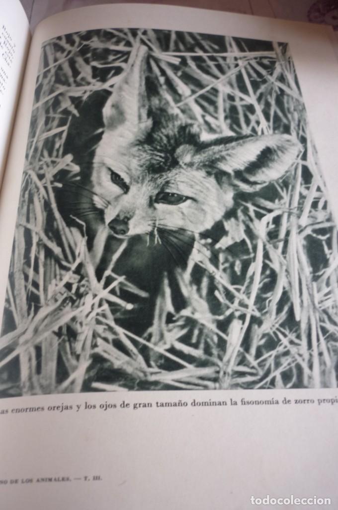 Libros de segunda mano: 1953 EL REINO DE LOS ANIMALES. ESPASA CALPE. TRES TOMOS. COMPLETA - Foto 14 - 168373880