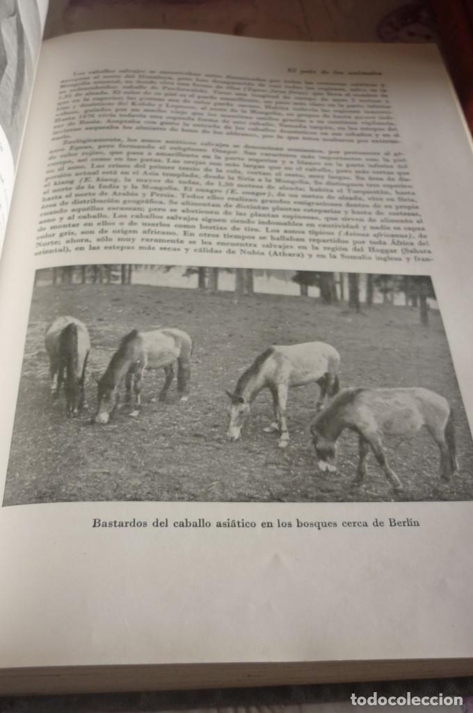 Libros de segunda mano: 1953 EL REINO DE LOS ANIMALES. ESPASA CALPE. TRES TOMOS. COMPLETA - Foto 15 - 168373880