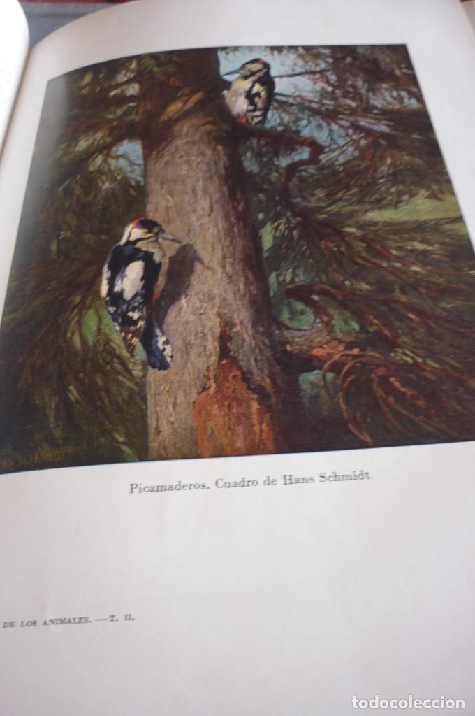 Libros de segunda mano: 1953 EL REINO DE LOS ANIMALES. ESPASA CALPE. TRES TOMOS. COMPLETA - Foto 16 - 168373880