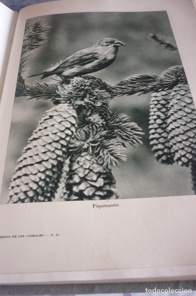 Libros de segunda mano: 1953 EL REINO DE LOS ANIMALES. ESPASA CALPE. TRES TOMOS. COMPLETA - Foto 17 - 168373880