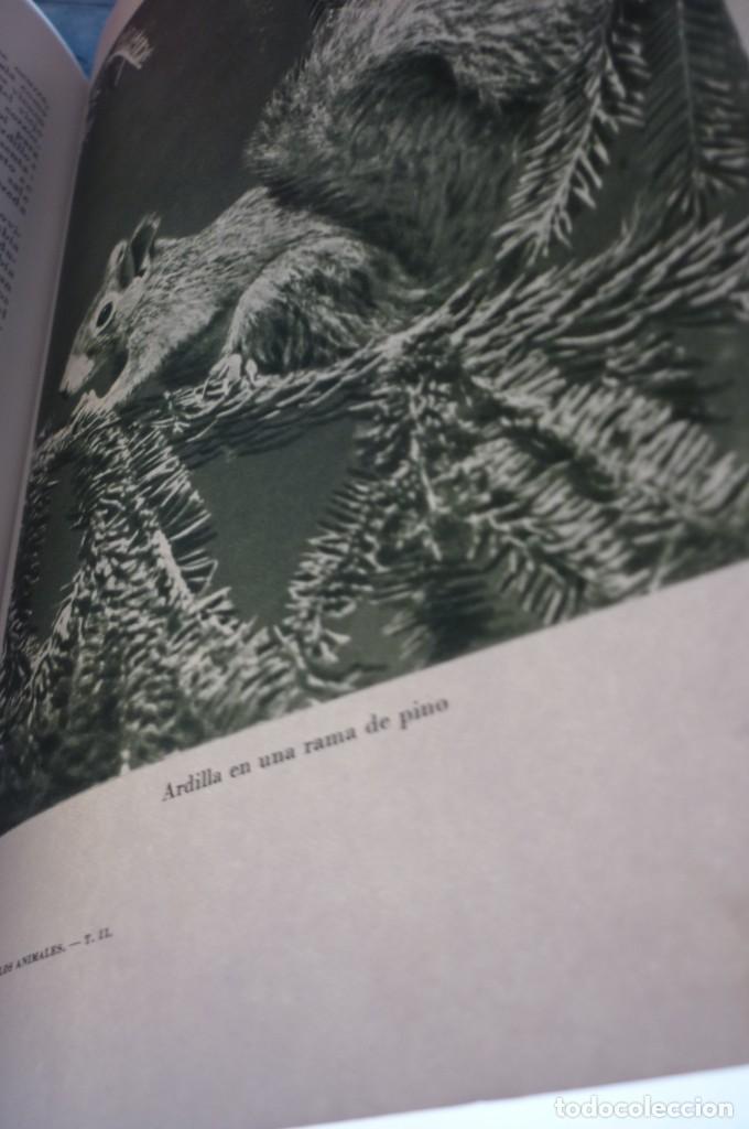 Libros de segunda mano: 1953 EL REINO DE LOS ANIMALES. ESPASA CALPE. TRES TOMOS. COMPLETA - Foto 18 - 168373880