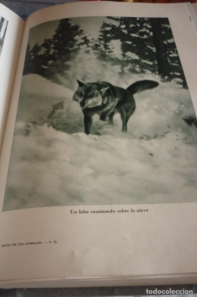 Libros de segunda mano: 1953 EL REINO DE LOS ANIMALES. ESPASA CALPE. TRES TOMOS. COMPLETA - Foto 19 - 168373880