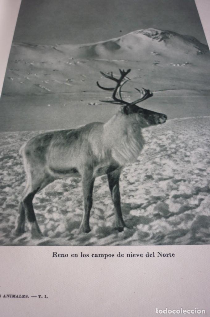 Libros de segunda mano: 1953 EL REINO DE LOS ANIMALES. ESPASA CALPE. TRES TOMOS. COMPLETA - Foto 21 - 168373880