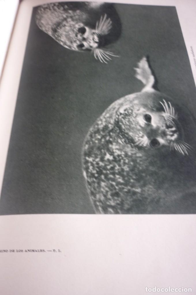 Libros de segunda mano: 1953 EL REINO DE LOS ANIMALES. ESPASA CALPE. TRES TOMOS. COMPLETA - Foto 22 - 168373880