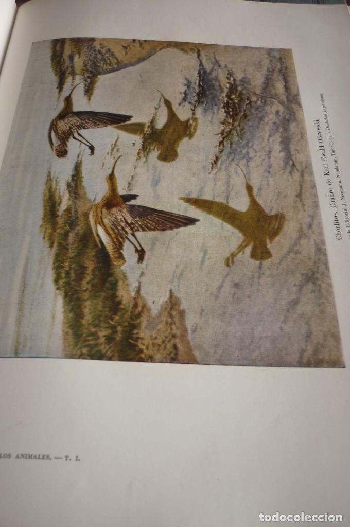 Libros de segunda mano: 1953 EL REINO DE LOS ANIMALES. ESPASA CALPE. TRES TOMOS. COMPLETA - Foto 23 - 168373880