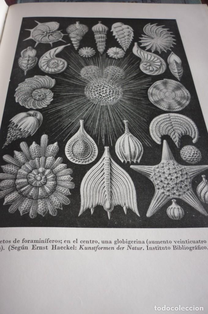 Libros de segunda mano: 1953 EL REINO DE LOS ANIMALES. ESPASA CALPE. TRES TOMOS. COMPLETA - Foto 24 - 168373880