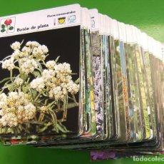Libros de segunda mano: 500 FICHAS - LAS PLANTAS (SAPE 1983). Lote 168379244
