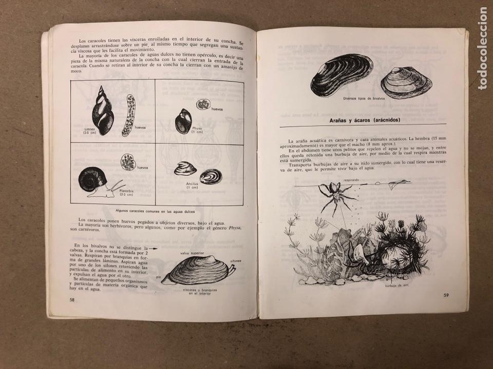Libros de segunda mano: LA VIDA EN LAS AGUAS DULCES. KONRAD AMMANN. EDITORIAL TEIDE 1987. - Foto 7 - 168744193