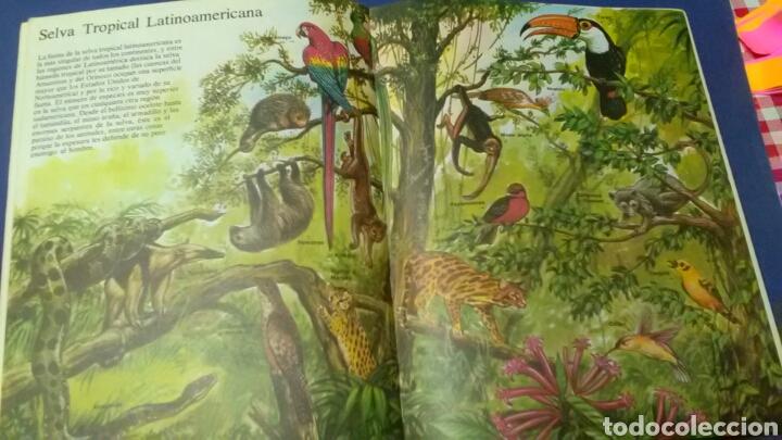 Libros de segunda mano: La senda d la naturaleza .ÁRBOLES Y HOJAS .Ed. Plesa - SM - Foto 2 - 169874193