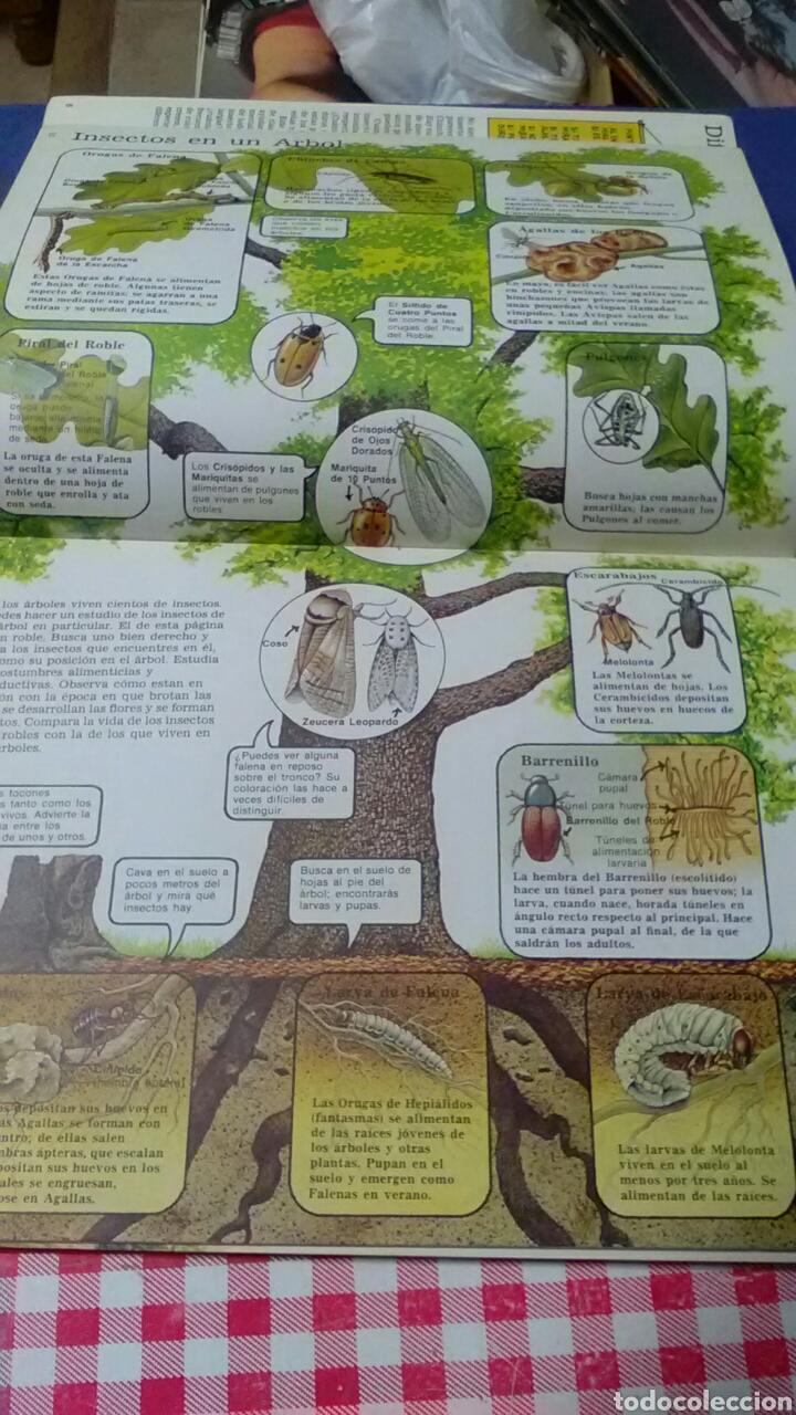 Libros de segunda mano: La senda de la naturaleza .INSECTOS Ed.Plesa SM - Foto 2 - 169874648