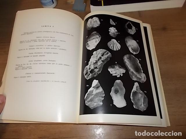 Libros de segunda mano: LOS TIEMPOS CUATERNARIOS EN BALEARES (MALLORCA,MENORCA ,IBIZA). JUAN CUERDA. 1ª EDICIÓN 1975. - Foto 2 - 170319966