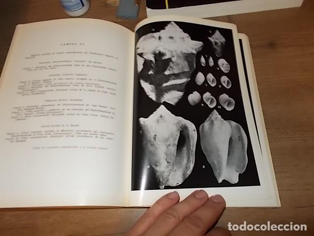 Libros de segunda mano: LOS TIEMPOS CUATERNARIOS EN BALEARES (MALLORCA,MENORCA ,IBIZA). JUAN CUERDA. 1ª EDICIÓN 1975. - Foto 8 - 170319966