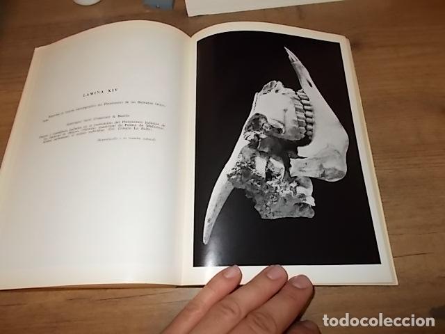 Libros de segunda mano: LOS TIEMPOS CUATERNARIOS EN BALEARES (MALLORCA,MENORCA ,IBIZA). JUAN CUERDA. 1ª EDICIÓN 1975. - Foto 10 - 170319966