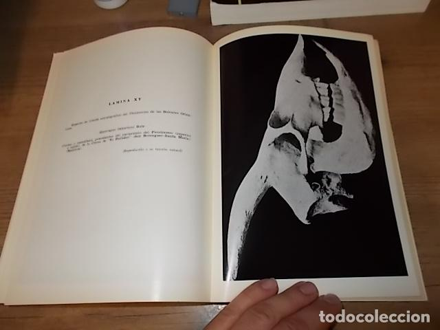 Libros de segunda mano: LOS TIEMPOS CUATERNARIOS EN BALEARES (MALLORCA,MENORCA ,IBIZA). JUAN CUERDA. 1ª EDICIÓN 1975. - Foto 11 - 170319966