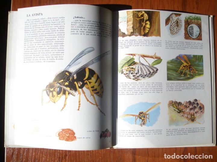 Libros de segunda mano: LIBRO VIDA INTIMA DE LOS ANIMALES DEL CAMPO Y DE LA GRANJA - Foto 2 - 170971320