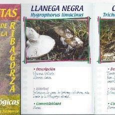 Libros de segunda mano: GUIA DE SETAS DE LA RIBAGORZA . Lote 171322657
