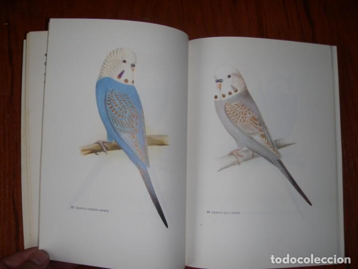 Libros de segunda mano: LIBRO PERIQUITOS DE COLOR A RUTGERS 1ª ED EN ESPAÑOL 1986 - Foto 11 - 171748407