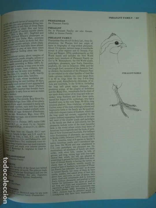 Libros de segunda mano: THE AUDUBON SOCIETY - ENCYCLOPEDIA OF NORTH AMERICAN BIRDS - JOHN K. TERRES - WING BOOKS, 1991 - Foto 9 - 172357773
