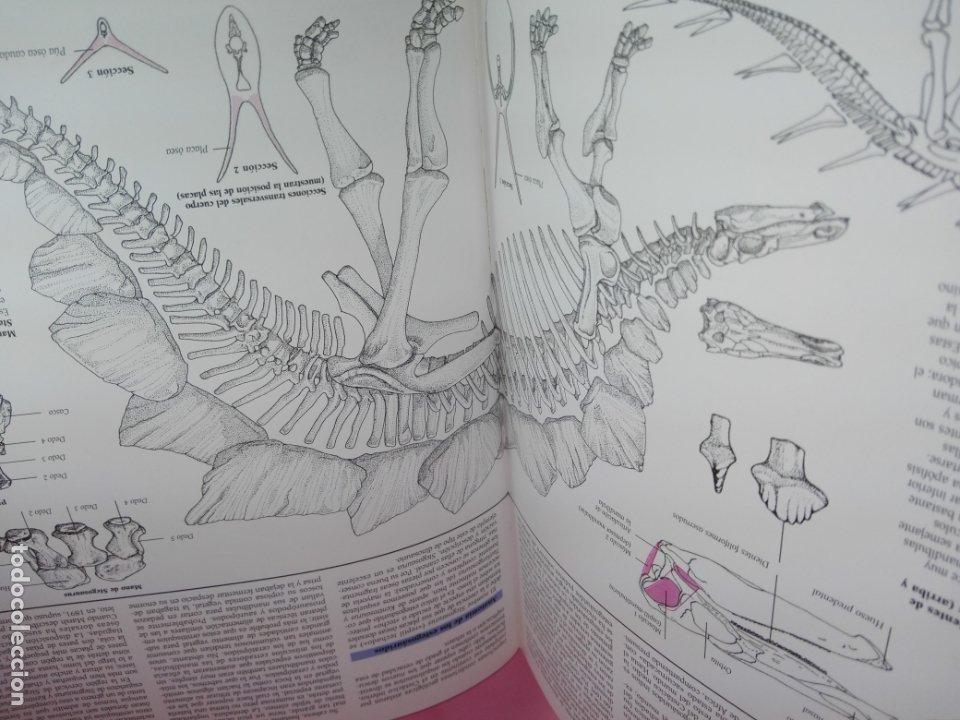 Libros de segunda mano: Libro-Atlas ilustrado de los Dinosaurios-Susaeta-Nuevo-Ver fotos - Foto 8 - 173092604