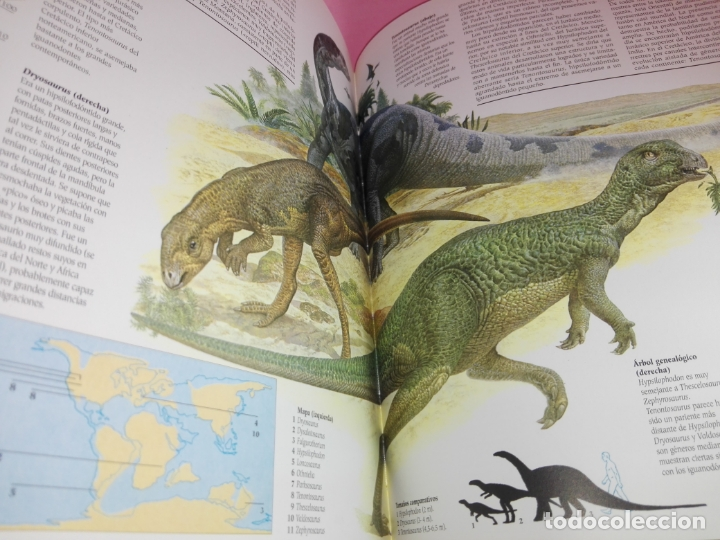 Libros de segunda mano: Libro-Atlas ilustrado de los Dinosaurios-Susaeta-Nuevo-Ver fotos - Foto 11 - 173092604