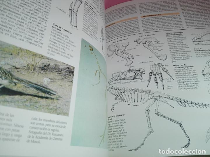 Libros de segunda mano: Libro-Atlas ilustrado de los Dinosaurios-Susaeta-Nuevo-Ver fotos - Foto 12 - 173092604