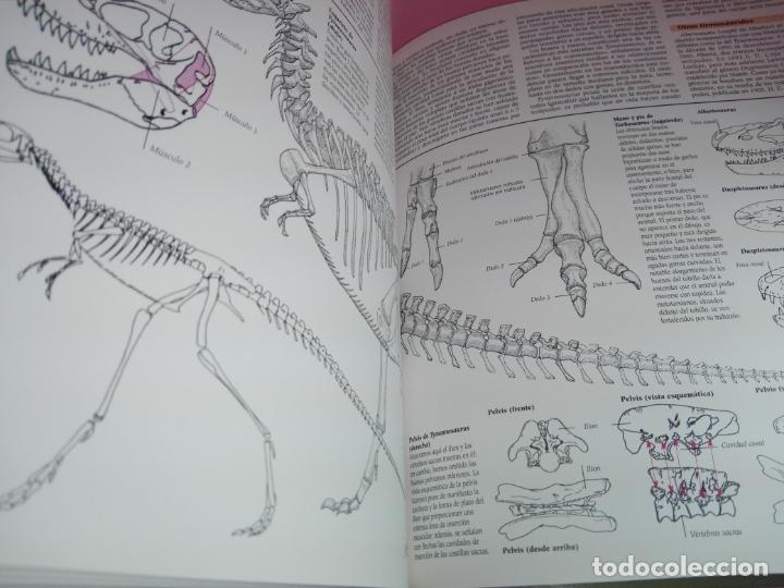 Libros de segunda mano: Libro-Atlas ilustrado de los Dinosaurios-Susaeta-Nuevo-Ver fotos - Foto 14 - 173092604