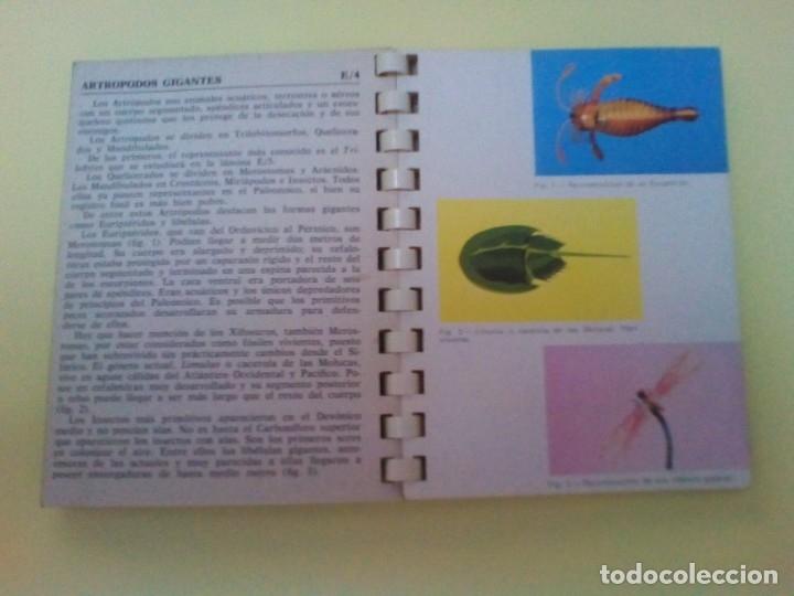 Libros de segunda mano: LA VIDA EN EL PASADO: LOS FÓSILES. (Mini Atlas Jover) - Foto 2 - 176052552
