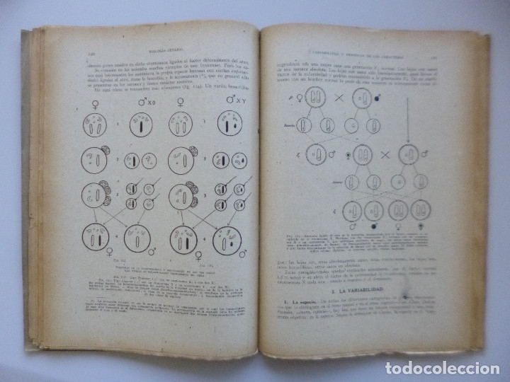 Libros de segunda mano: DR. SALUSTIO ALVARADO // BIOLOGÍA GENERAL, ECOLOGÍA Y BIOGEOGRAFÍA // 1940 - Foto 4 - 176775277