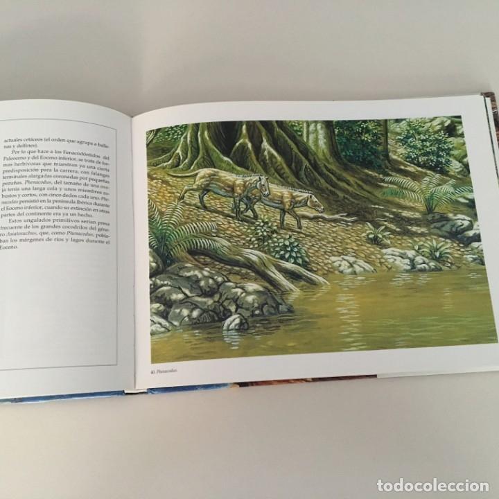 Libros de segunda mano: Memoria de la tierra. Vertebrados fósiles de la Península Ibérica. - Foto 2 - 177595723