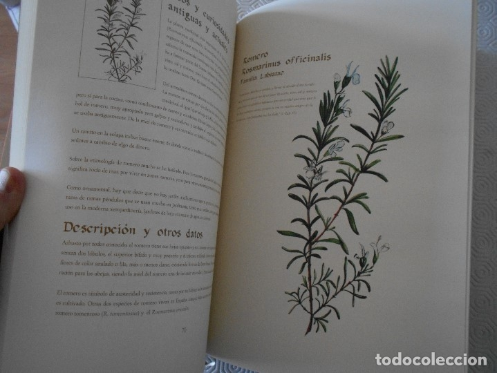 Libros de segunda mano: COMPENDIO DE PLANTAS CITADAS EN EL LIBRO EL INGENIOSO HIDALGO DON QUIJOTE DE LA MANCHA. EDICION UNIC - Foto 16 - 177783035