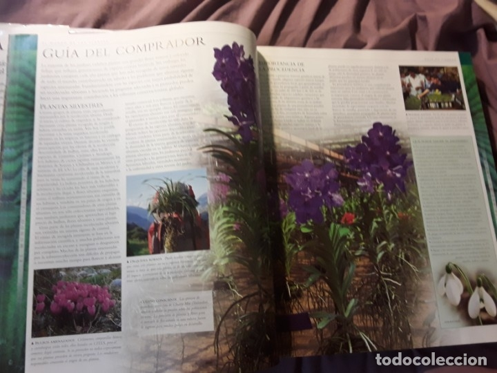 Libros de segunda mano: Planta, de Janet Marinelli (ed.). Excelente estado. Royal Botanic Gardens Kew. Pearson Alhambra. - Foto 5 - 235286280