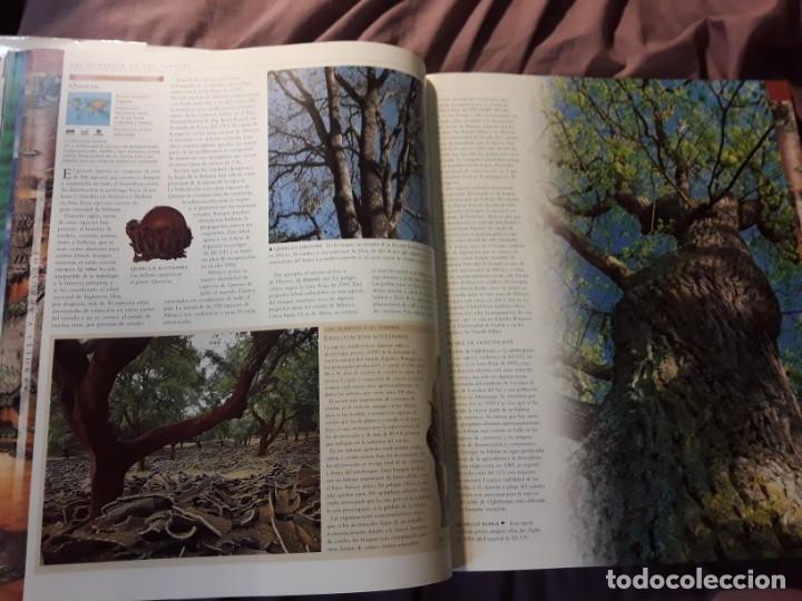 Libros de segunda mano: Planta, de Janet Marinelli (ed.). Excelente estado. Royal Botanic Gardens Kew. Pearson Alhambra. - Foto 6 - 235286280