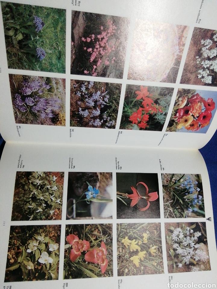 Libros de segunda mano: DICCIONARIO ILUSTRADO EN COLOR DE PLANTAS DE JARDÍN CON PLANTAS DE INTERIOR Y DE INVERNADERO. - Foto 4 - 182326533