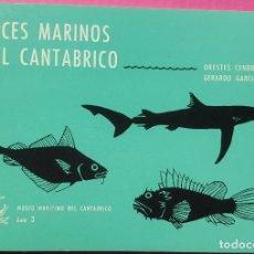Libros de segunda mano: PECES MARINOS DEL CANTÁBRICO. ORESTES CENDRERO UCEDA Y GERARDO GARCÍA-CASTRILLO. MUSEO MARÍTIMO DEL. Lote 182742760