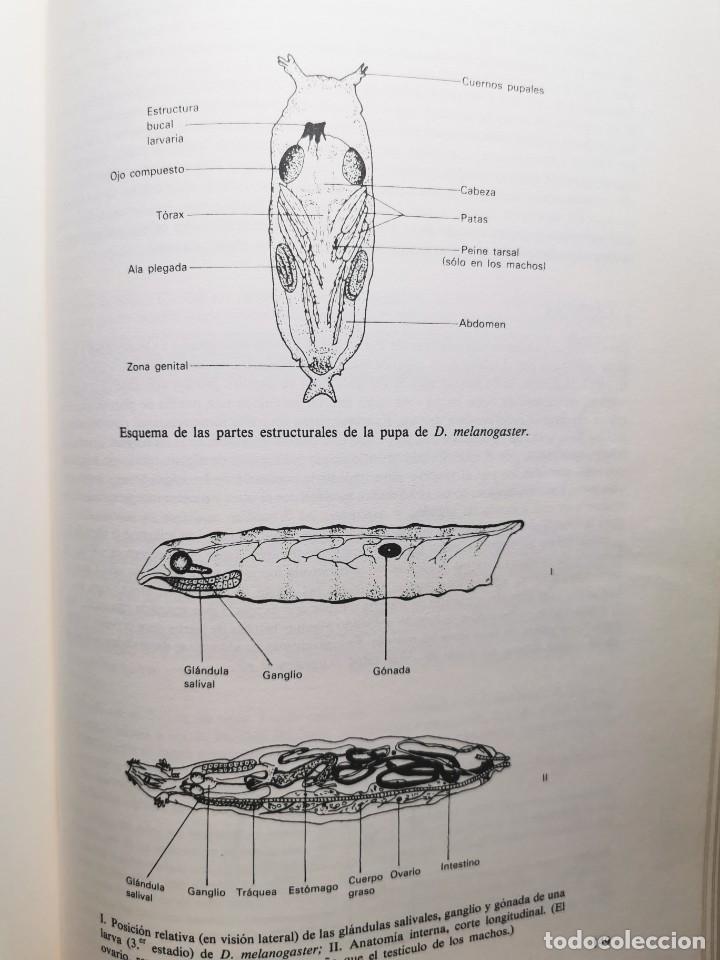 Libros de segunda mano: PRACTICAS DE BIOLOGIA (Varios autores) - Foto 4 - 183867056