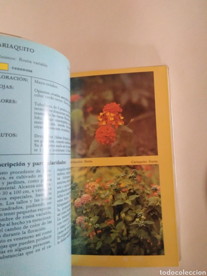 Libros de segunda mano: Frutos silvestres comestibles y venenosos / Manuel Durruti. Guía naturaleza Everest. - Foto 2 - 183864021