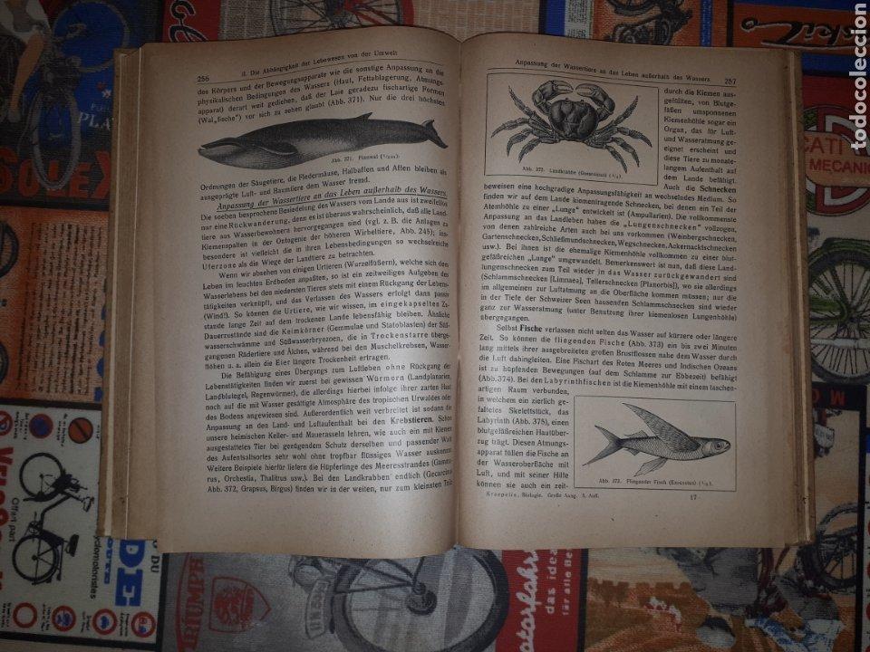 Libros de segunda mano: Einführung in die Biologie. Prof. Dr. Karl Kraepelin. Berlín, 1921. - Foto 7 - 188819341