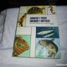 Libros de segunda mano: AGNATOS Y PECES ANFIBIOS Y REPTILES.ENCICLOPEDIA MONOGRAFICA DE CIENCIAS NATURALES.AGUILAR 1974.-1ª . Lote 189654278
