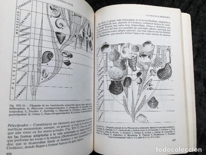 Libros de segunda mano: GEOLOGÍA - ALFONSO Y FEENANDO MELÉNDEZ HEVIA - PARANINFO - RARO EN COMERCIO - Foto 4 - 192462363