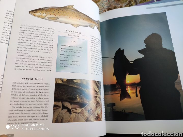 Libros de segunda mano: The Freshwater Fish Identifier. Scott Weidensaul. Edita Mallard 1992 - Foto 3 - 194213523