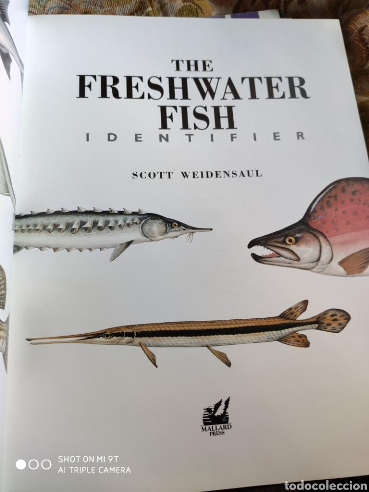 THE FRESHWATER FISH IDENTIFIER. SCOTT WEIDENSAUL. EDITA MALLARD 1992 (Libros de Segunda Mano - Ciencias, Manuales y Oficios - Biología y Botánica)