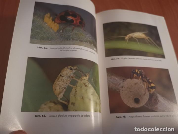 Libros de segunda mano: MAGNÍFICO LIBRO ELOGIO DEL INSECTO POR ENRICO STELLA ARIEL CIENCIA 1993 - Foto 10 - 194246817