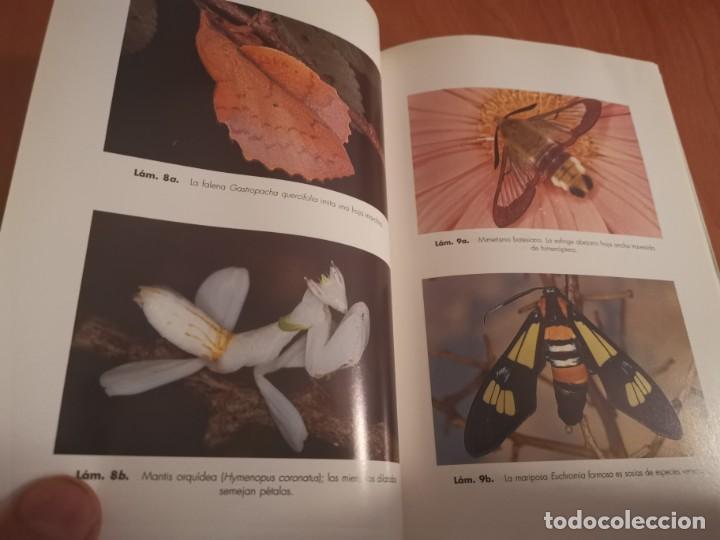 Libros de segunda mano: MAGNÍFICO LIBRO ELOGIO DEL INSECTO POR ENRICO STELLA ARIEL CIENCIA 1993 - Foto 11 - 194246817