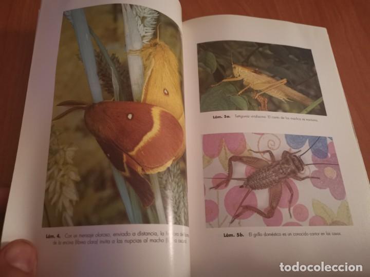 Libros de segunda mano: MAGNÍFICO LIBRO ELOGIO DEL INSECTO POR ENRICO STELLA ARIEL CIENCIA 1993 - Foto 12 - 194246817