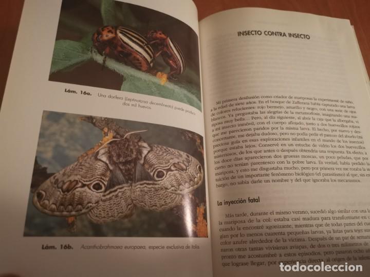 Libros de segunda mano: MAGNÍFICO LIBRO ELOGIO DEL INSECTO POR ENRICO STELLA ARIEL CIENCIA 1993 - Foto 15 - 194246817