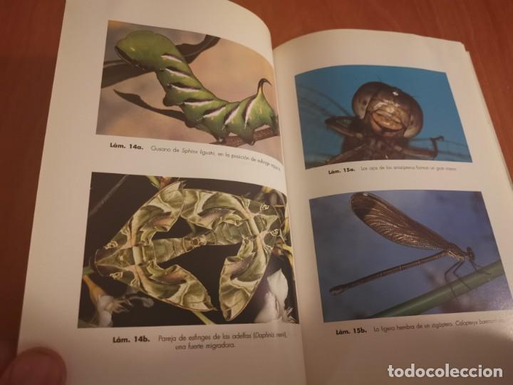 Libros de segunda mano: MAGNÍFICO LIBRO ELOGIO DEL INSECTO POR ENRICO STELLA ARIEL CIENCIA 1993 - Foto 16 - 194246817