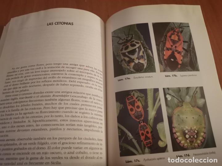 Libros de segunda mano: MAGNÍFICO LIBRO ELOGIO DEL INSECTO POR ENRICO STELLA ARIEL CIENCIA 1993 - Foto 17 - 194246817