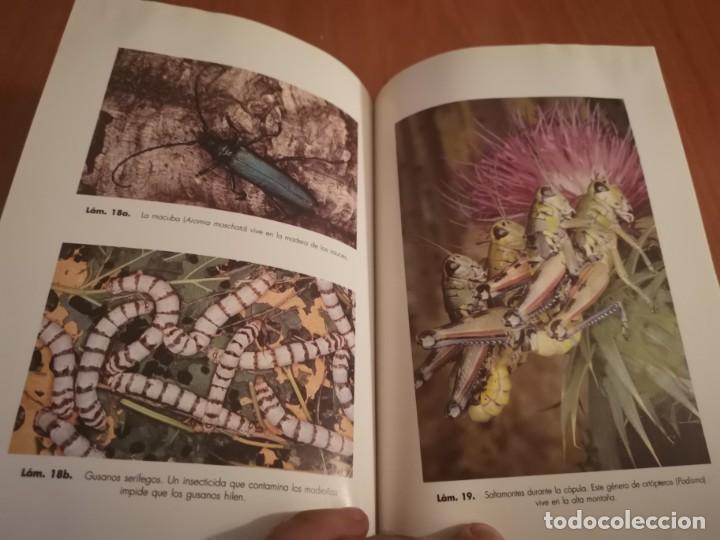 Libros de segunda mano: MAGNÍFICO LIBRO ELOGIO DEL INSECTO POR ENRICO STELLA ARIEL CIENCIA 1993 - Foto 18 - 194246817