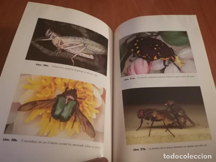 Libros de segunda mano: MAGNÍFICO LIBRO ELOGIO DEL INSECTO POR ENRICO STELLA ARIEL CIENCIA 1993 - Foto 19 - 194246817
