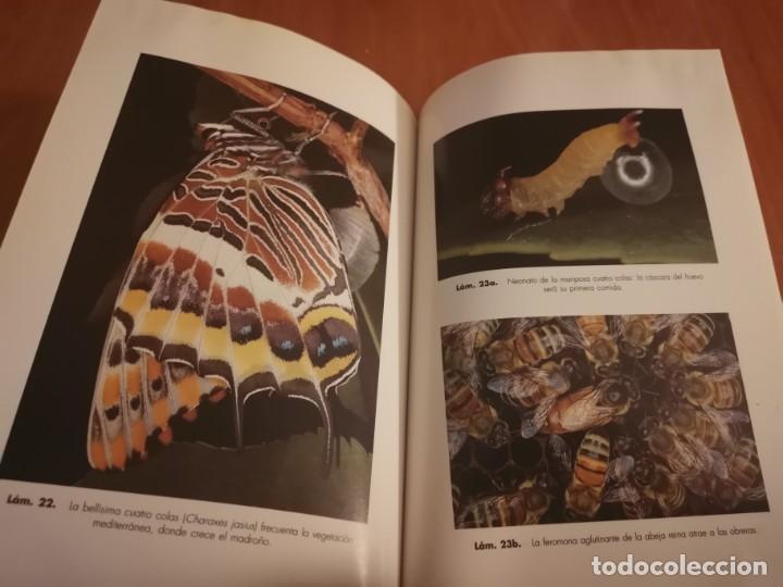 Libros de segunda mano: MAGNÍFICO LIBRO ELOGIO DEL INSECTO POR ENRICO STELLA ARIEL CIENCIA 1993 - Foto 20 - 194246817